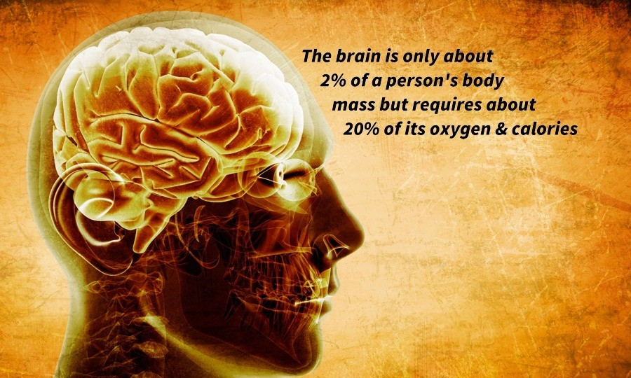 10-the-brain-requires-20-percent-of-the-bodies-oxygen-and-calories